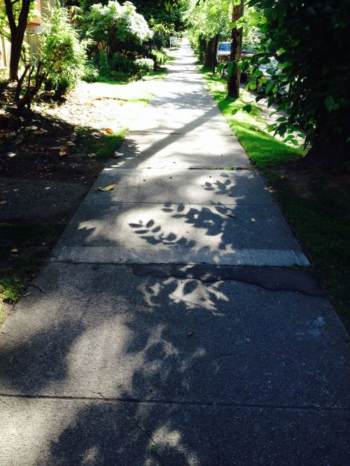sidewalk in the sun july 2014