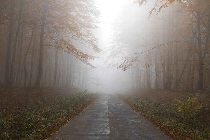 autum-road-fog-end