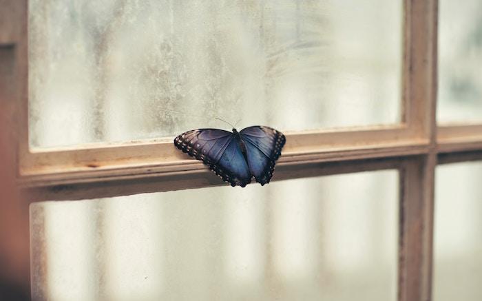 butterfly jian-xhin